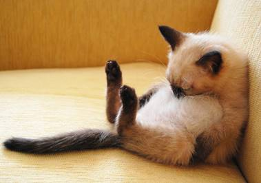 逆流性食道炎で寝るときにオススメの寝方